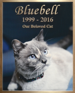 Pet Bluebell Cat