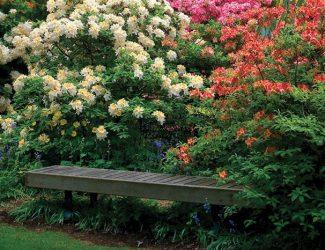 Flower & Bench